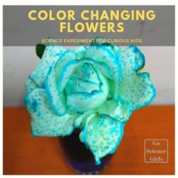 Why Do Flowers Change Color in Food Coloring – Experiment for Kids