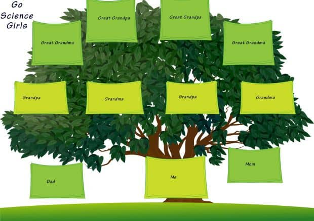 Family Tree Template For Middle School