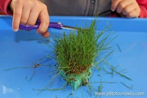 Grow your own real green grass Christmas tree