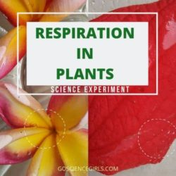 Respiration in Plants – Live Proof