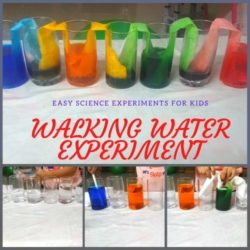 Walking Water Experiment – Teach Capillary Action to Kids