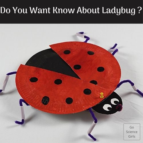 Do You Want Know About Ladybug
