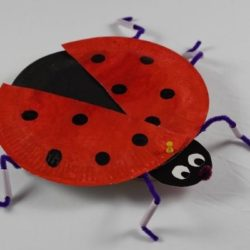 How to Make 3D Ladybug Model (Lifecycle Included)