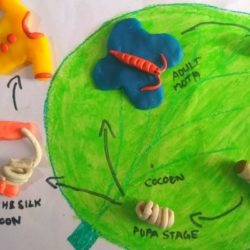 Life Cycle of Silkworm : 3D Model for Science Fair Project