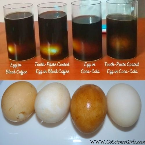 Science Behind The Egg and Toothpaste Activity