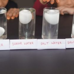 Floating Egg Science Experiment ( Using Salt, Sugar & Saline Water)