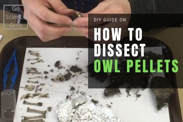 How to Dissect Owl Pellets - DIY Guide
