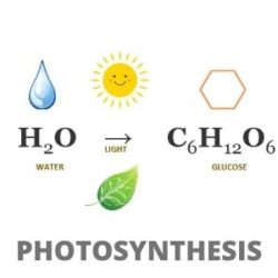 Photosynthesis: Step by Step Guide (Experiments Included)
