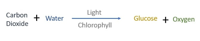 Photosynthesis Chemical Reaction in Words